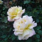 Karen's Roses, Inspirations by Karen and Laszlo Lak